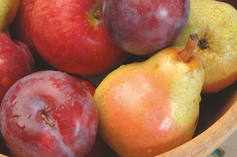 fruita segria